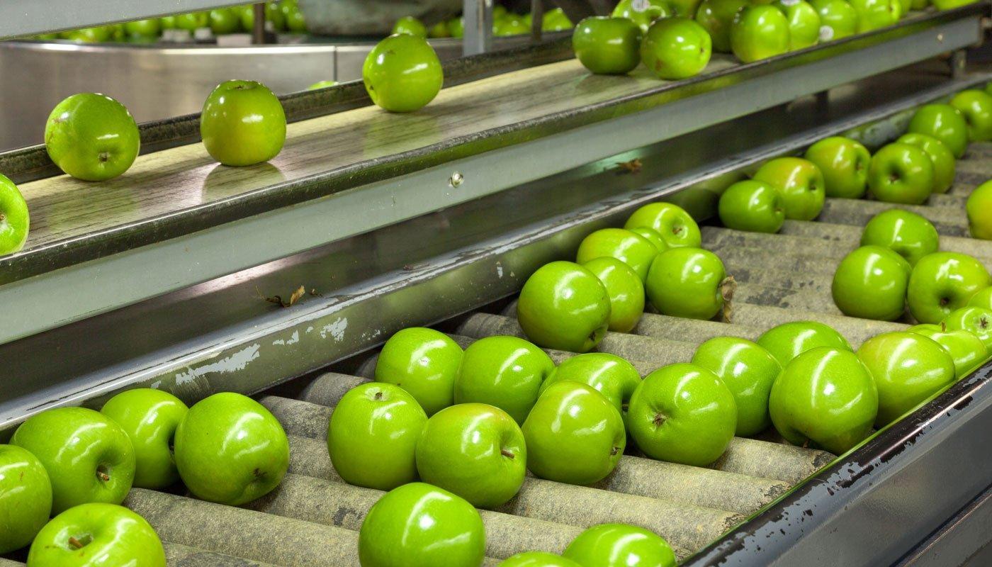Hizmetlerimiz - 4A Sebze Meyve - Manavgat - ARAŞTIRMA VE PAKETLEME